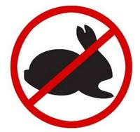 No Easter bunny